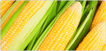 Maize Derivatives